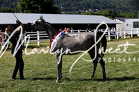 ECAHO Championship Yearling Fillies